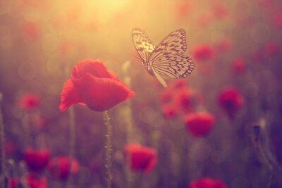 Sticker Poppy and butterfly