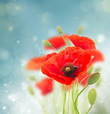 Sticker Poppy flowers