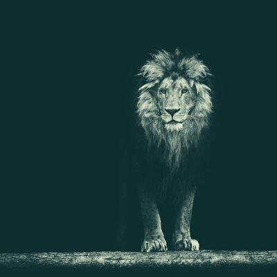 Sticker Portrait, beau, lion, lion, sombre