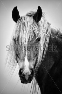 Sticker Portrait de cheval noir et blanc