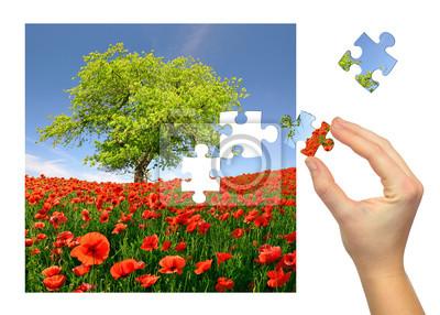 Puzzle paysage de printemps avec le champ de pavot