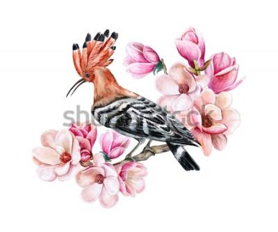 Sticker Queue de poule oiseau assis sur une branche de printemps en fleurs. Fleurs de Magnolia. Aquarelle. Illustration. Modèle. Clipart. Fermer. Carte