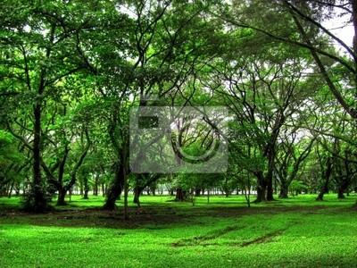 Rain Forest à Bornéo