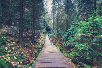 Sticker Randonnée, sentier, intérieur, forêt, paysage