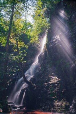 Sticker Rayos de sol à travers les feuilles du bois dans la cascade de Hortas, Galice