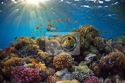 Sticker Récif de corail