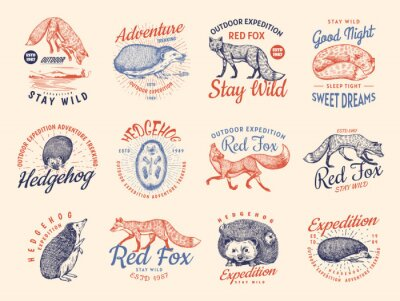 Sticker Red fox and Hedgehog badges set. Forest ginger wild animal label or logo. Vector Engraved hand drawn Vintage old sketch for stamp, t-shirt or typography.