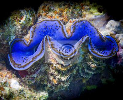 Red Sea Blue Giant clam près portrait