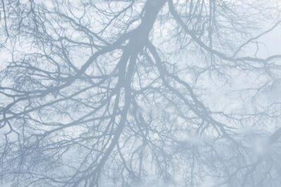 Sticker reflet d'un arbre en hiver dans une flaque d'eau