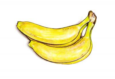 Sticker Régime de bananes isolé sur fond blanc. Illustration d'aquarelle. Fruits tropicaux