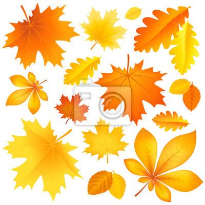 Réglez feuilles d'automne