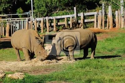 rhinos couple