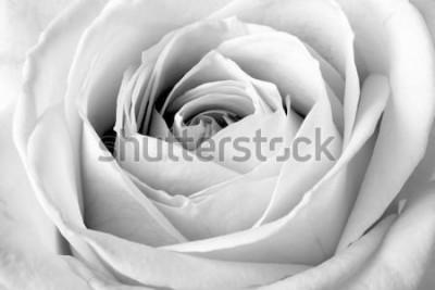 Sticker Rose blanche, macro noir et blanc