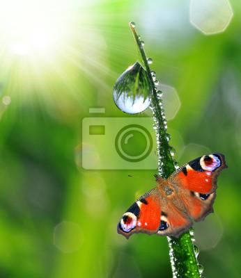 rosée du matin frais et papillon
