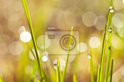 rosée sur l'herbe