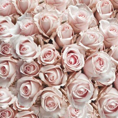 Sticker Roses roses vintage