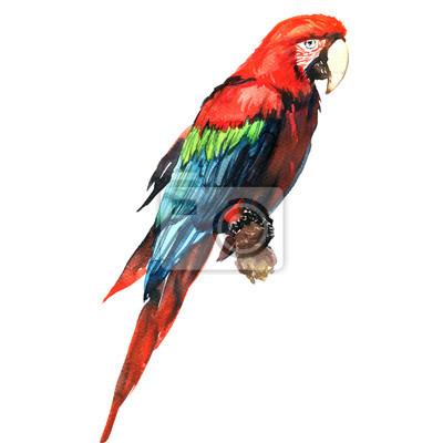 Rouge, vert, Macaw, ara, perroquet, branche, isolé, aquarelle, Illustration