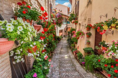 Sticker Rue, petit, ville, Italie, ensoleillé, jour, Ombrie
