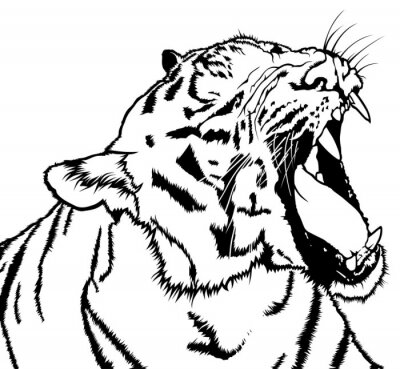 Sticker Rugissant, tigre, noir, blanc, dessin, Illustration, vecteur