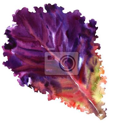 Salade, feuille, frais, rouges, laitue, isolé, aquarelle, Illustration, blanc