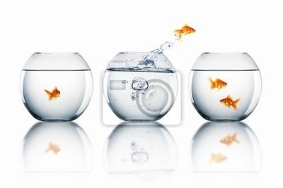 saut de poisson rouge