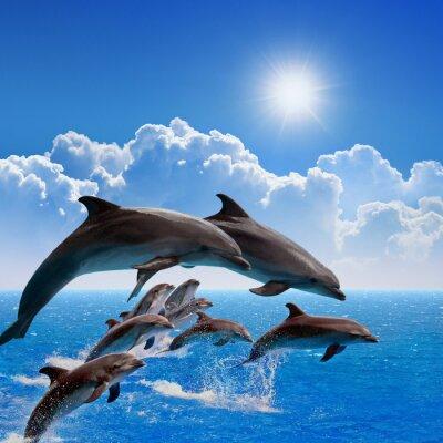 Sticker Saut des dauphins