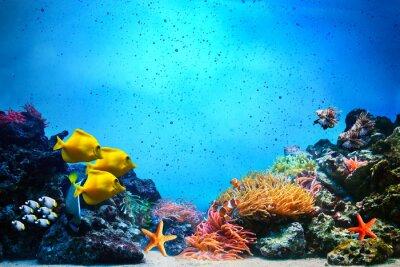 Sticker Scène sous-marine. récif, groupes de poissons coralliens dans l'eau de mer claire