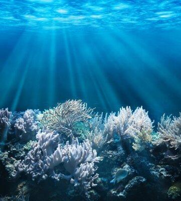 Sticker Scène sous-marine tranquille, avec copie espace