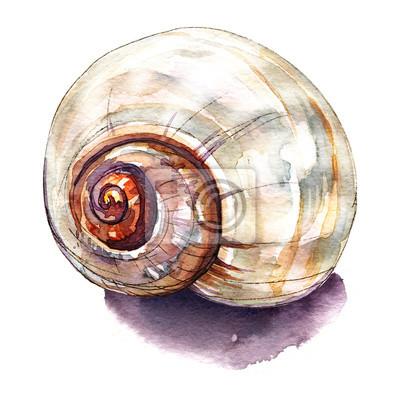 Sea Shell isolé sur blanc