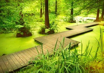 Sticker Sentier moderne ou passerelle sur un étang dans les bois. Vieux, Arbres, debout, mouette, marais, forêt Rayon de soleil et lumière lisse tombant à travers les sommets des arbres.