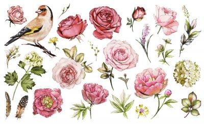 Sticker Set aquarelle éléments de fleur rose, pivoines, hydrangea, jardin de collection et fleurs sauvages, feuilles, branches, illustration isolé sur fond blanc, oiseau - chardonneret, bourgeon rose