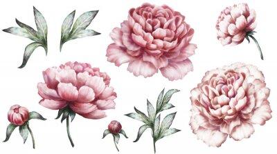 Sticker Set éléments d'aquarelle vintage de pivoines roses, fleurs de jardin collection, feuilles, illustration isolé sur fond blanc. Bourgeon et feuille, pivoine