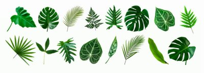 Sticker set of green monstera palm and tropical plant leaf isolated on white background for design elements, Flat lay