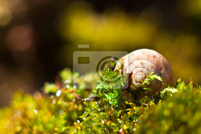 shell sur l'herbe