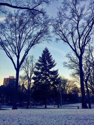 Silhouette, arbre, neige, terrestre, Central, Parc, nouveau, York