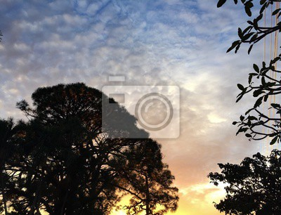 Silhouette, arbre, nuageux, Coucher soleil, ciel, Floride