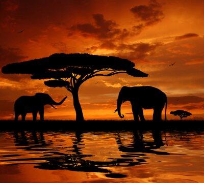 Silhouette deux éléphants au coucher du soleil