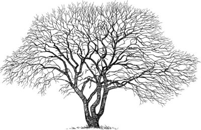 Sticker silhouette du vieil arbre