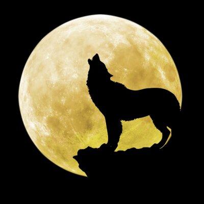 Sticker Silhouette, loup, devant, lune