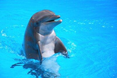 Sticker Śmiejący się w Delfin Loro Parc na Teneryfie