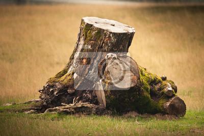 Sticker Souche arbre