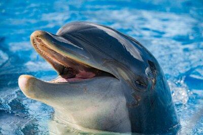 Sticker Sourire, dauphin, regarder, vous