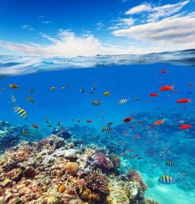 Sticker Sous-marin, corail, récif, Horizon, eau, vagues