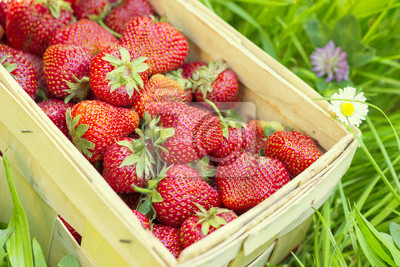 Strawberries in a basket on grass