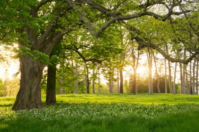 Sticker Sunlight in the green forest springtime