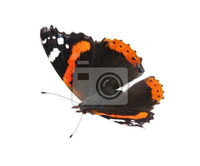 sur fond blanc papillon