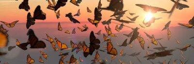 Sticker swarm of monarch butterflies, Danaus plexippus group during sunset