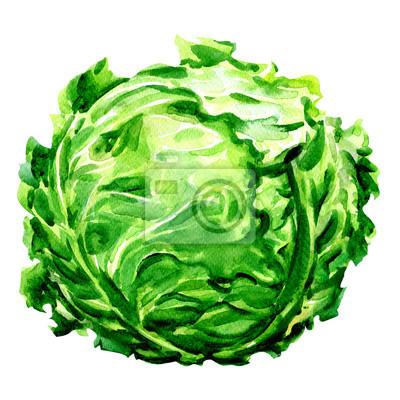 Tête de chou frais vert isolé, illustration d'aquarelle sur blanc