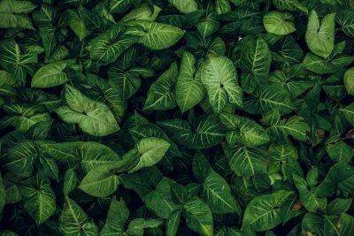 Sticker Texture de la feuille verte. Texture de feuille de fond