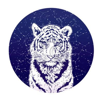 Tiger et le ciel stellaire.